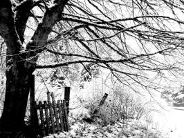 Snowy Branches and a Fence by seabug