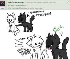 Question #2- Oh Breezepelt... by oO-Ask-Hollyleaf-Oo