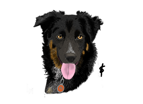 Glen border collie by fanny3001