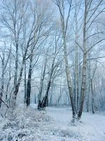 Snow Trees 163325 by StockProject1