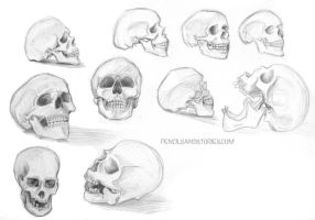 Skull Studies by HenrikeD