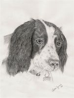 Springer by carriephlyons