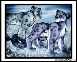 Snow Leopards for Biology X3 by raccoonlady