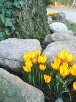 spring is calling early... by Lexana