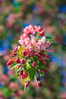 5 Days of Flowers 2014: Day 4d by Henrickson