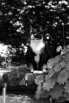 black and white photo and cat by pagan-live-style