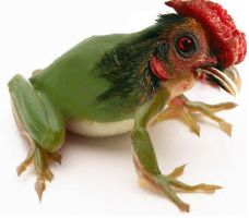 Frog and Rooster mix by ellenah1