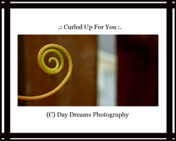 .:Curled Up For You:. by DayDreamsPhotography