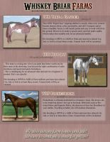 Horses open to Breeding by Rising-High-Ranch