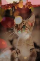 x'mas cat 2 by akashic0807