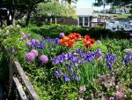 Joyful Flowers In Perkins Cove by BlueSolitaire