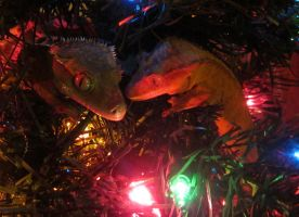 Happy Holidays from the Crested Geckos by Tikuu10