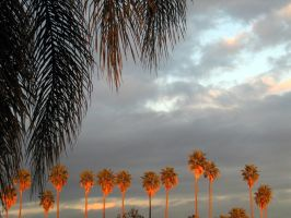 California Palms: 3 of 3 by spyed