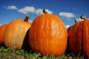 Pumpkins by asaph70