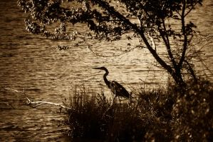 Heron Under The Tree by LDFranklin