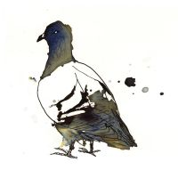 InkAnimals - Pigeon by Duffzilla