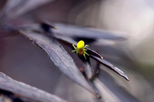 Neon Green Spider by DoodleBe