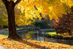 Fall Color in the Park 2 by Mr-Low-Notes