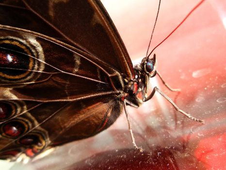 butterfly on glass by ReginaldBull