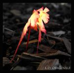 Firey Leaf Sprout by LetsAllBeNuerotic