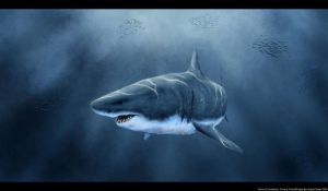 great white shark by frozenapocalypse