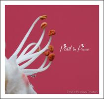 Pistil in Peace by Emilie25