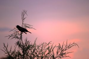 Evening Raven Silhouette by ExposurePersonality