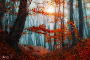 Gandalf's world by ildiko-neer