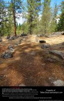 Pine Forest Stock (6) by Tefee-Stock