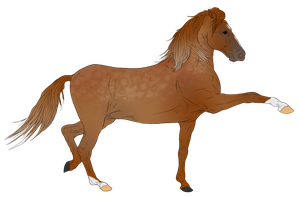Andalusian Auction Horse 13 by HoofHaven