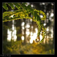 Sunset fern and droplet by Discomax