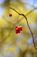 The fruits of autumn by Nikki-vdp
