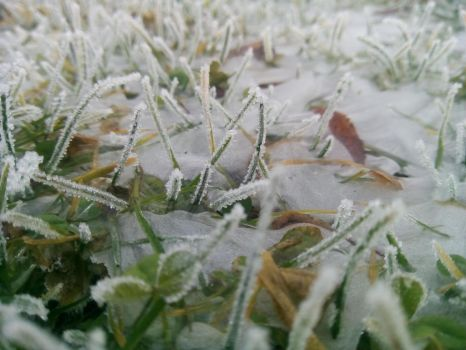 Frost frosting by Pierune