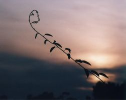 Summer vine at Sunset by CorazondeDios