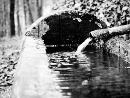 BW wooden well in the forest - Guettingen by elDenim