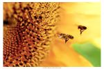 In A Bee's World by NadavDov