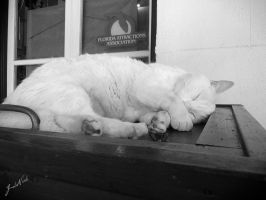 Key west cat by Boomagoo