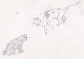 Old Cat Studies by Lucern7