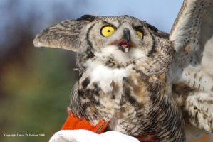 horned owl by QueenRebecca