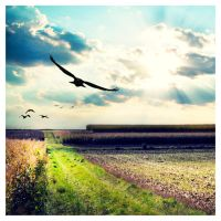 fly away by cwiny