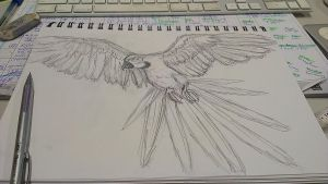 Macaw Speed Sketch Practice by PKLdesigner