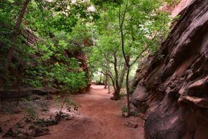 Slot Canyon Invasion by Caloxort