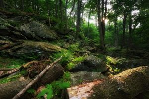 Enchanted Forest by Mashuto