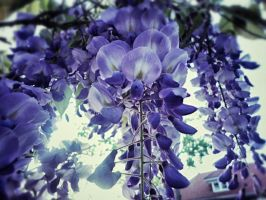 Purple Bells by Sparia
