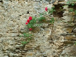 Withered Walls and Roses by Rhian-Skyblade