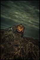 Ghost Train by xAgNO3x