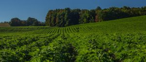 Crops by philipbrunner