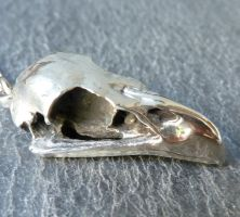 Bald Eagle Skull Necklace by thepewterwolf
