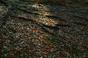 autumn mountain roots leaves 2 by deepest-stock