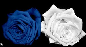 Roses of life #2 by Bouwland